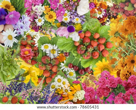 Simple collage mix  imagination from bright summers flowers and berries background