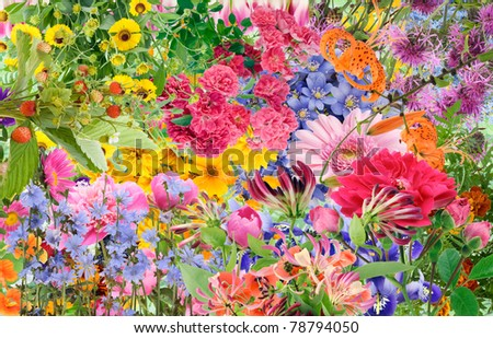Simple collage mix  imagination from bright summers flowers and plants background