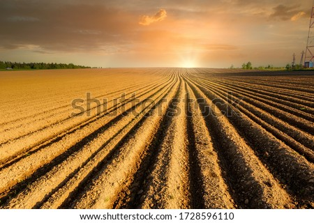 Simple country landscape with plowed fields and blue skies. Furrows row pattern in a plowed land prepared for planting potatoes crops in spring.  Сток-фото ©