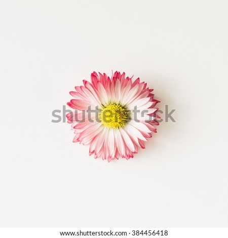 Simple daisy flower on white background.