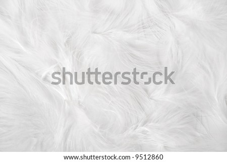 Simple easter background - white feathers on white background