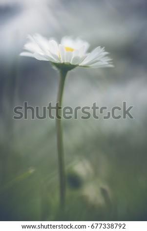 Simple flower #677338792