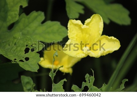Simple flower  #699460042