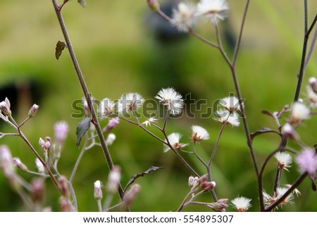 simple flowers background #554895307