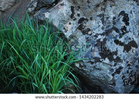 Simple grass simple stone decorate the garden #1434202283
