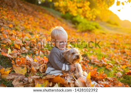 Simple happiness. Child play with yorkshire terrier dog. Toddler boy enjoy autumn with dog friend. Small baby toddler on sunny autumn day walk with dog. Happy childhood. Sweet childhood memories.