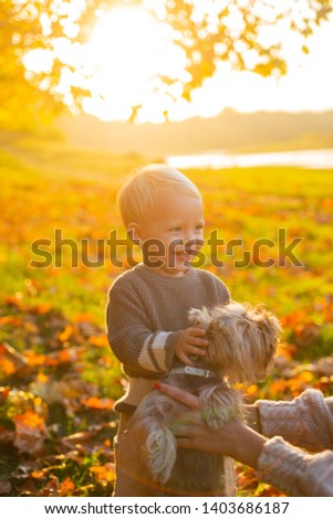 Simple happiness. Happy childhood. Sweet childhood memories. Child play with yorkshire terrier dog. Toddler boy enjoy autumn with dog friend. Small baby toddler on sunny autumn day walk with dog.
