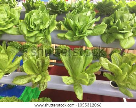 Simple Planting vegetables #1055312066