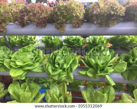 Simple Planting vegetables #1055312069