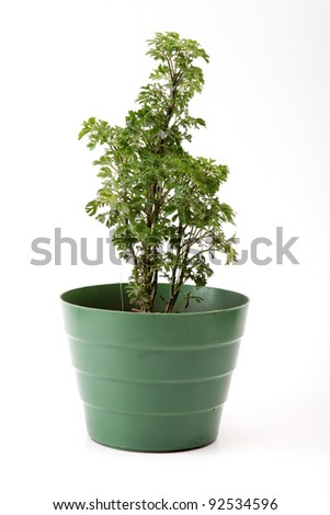 simple plastic pot on white background, green image