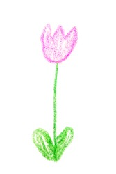 Simple quickly spring flower childish pencil drawing photography, isolated on white background. Infantile pencil drawing of tulip, white backdrop. Photo of naive child flower drawing, graphic element.