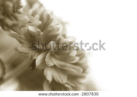 Simple sepia mum in the corner against a white background