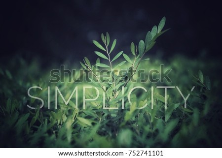SIMPLICITY text in green leaves, High quality image