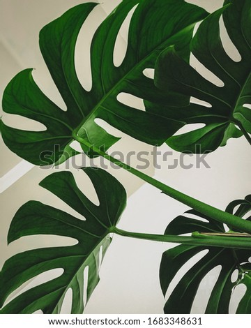 simplistic Design of green leaves Photo stock ©