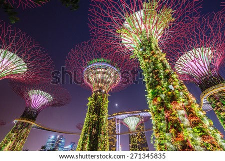 SINGAPORE - February 22 2015: Night view of The Supertree Grove at Gardens near Marina Bay. Gardens by Bay was crowned World Building of Year at World Architecture Festival 2012