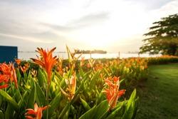 Singapore Sentosa Island sea beach flower garden with cloud evening twilight sky and flare background landscape