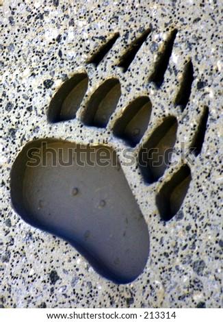 single bear claw