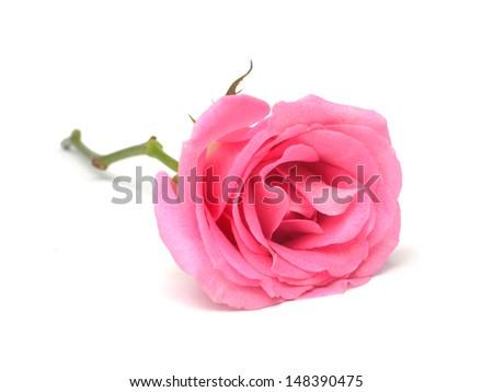 stock-photo-single-beautiful-pink-rose-isolated-on-white-background-148390475.jpg