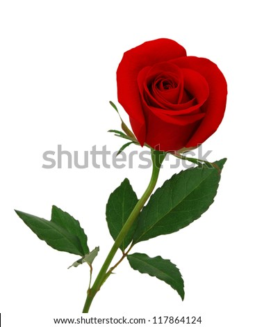 stock photo : Single beautiful red rose isolated on white background
