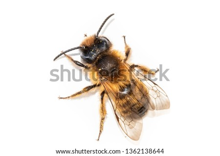 Single bee pictured from above