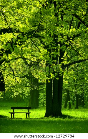 Single bench in park, under beautiful tree, spring - Shutterstock ID 12729784