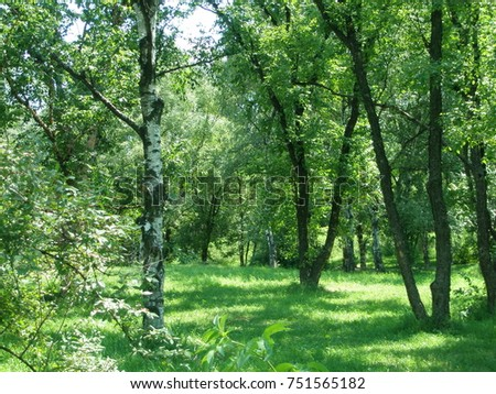 birch tree lesbian singles In landscapes it may be grown as a single-stemmed tree or in a multi-stemmed clump figure 1 young betula papyrifera: paper birch trees to bronze birch.