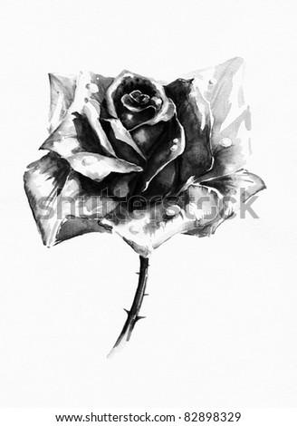 Single black rose watercolor painted.