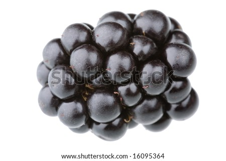 Single blackberry fruit isolated against white background