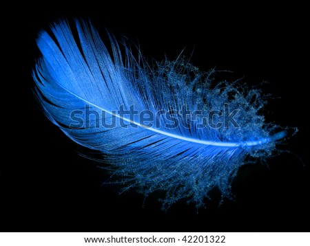 Single blue feather over black background