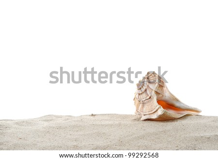 Single Conch sea shell on sand isolated on white