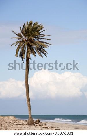 thousand palms middle eastern singles Three desert fan palm oases  thousand palms oasis / coachella valley preserve  take ramon road east to thousand palms road from indio, take washington street .