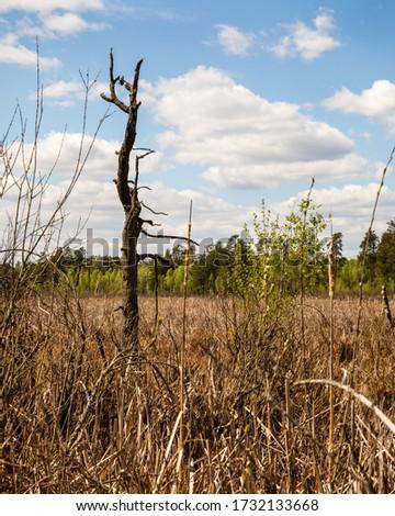 Single dead tree trunk on marshland. Magazyn nature reserve in Sobiborski Landscape Park in Poland, Europe. Zdjęcia stock ©