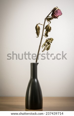 Single dried rose flower with dried leafs