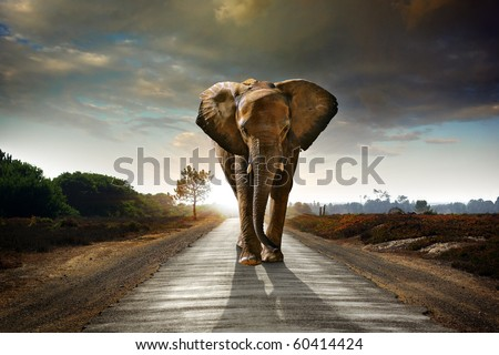 Single elephant walking in a road with the Sun from behind - stock photo