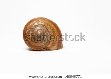 single empty snail shell isolated