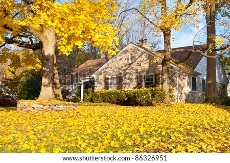 Single family home in suburban Philadelphia. Yellow Norway Maple leaves and tree