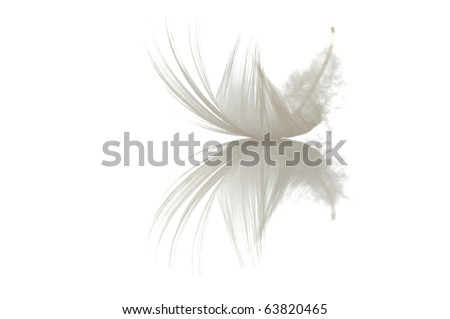 single feather on white