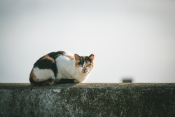 Single Feral Cat sitting above a white wall with sky background