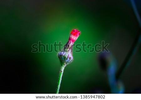 single flower in single tree