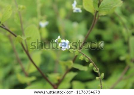 single flower nature