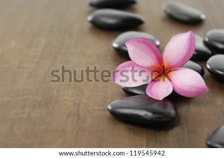 single frangipani with black stones on wooden board - stock photo