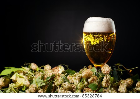 Single glass of beer with hop over black