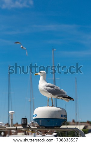 Single gull, Laridae, stands on yacht alarm signal device in marina. Vertical close up portrait. Seagull flying in background on clear blue sky.