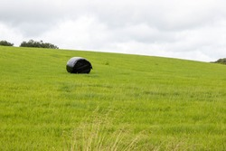 single hay roles in a green field sealed from weather