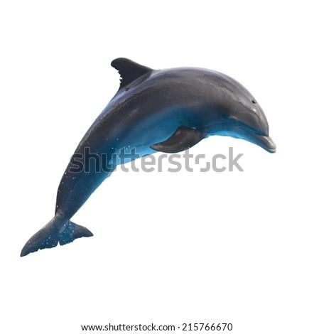 single jumping  bottlenose dolphin isolated on white background