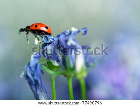 Single Ladybug on violet bellflowers in the garden in spring