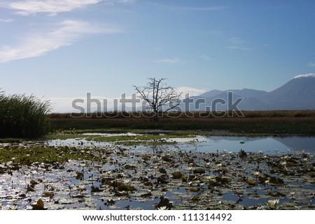 single lagoon tree