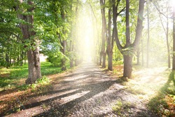 Single lane rural gravel road through the tall green linden trees. Sunlight flowing through the tree trunks. Idyllic forest scene. Art, hope, heaven, wilderness, loneliness, pure nature concepts