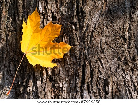 single leaf on a background of old wood