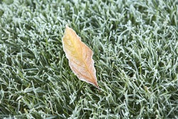 Single leaf on grass with frost